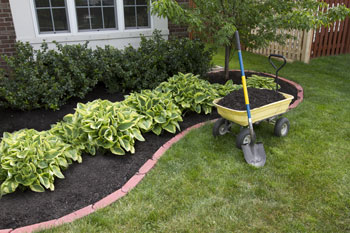 image of diy landscape project